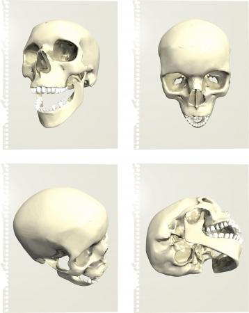 Series of human skulls Stock Vector - 14466104