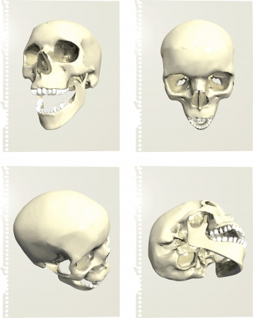 Series of human skulls Stock Vector - 14466104