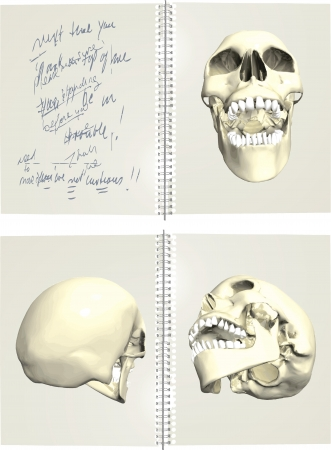 Series of human skulls Stock Vector - 14466102