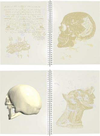 Series of human skulls Stock Vector - 14466105