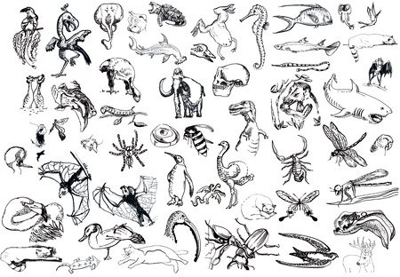 animals - mega collection Stock Photo - 14592908