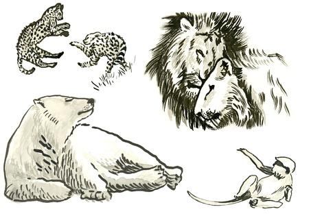 lioness: animals   water colors technique