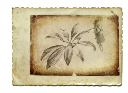 archaically: hand drawing and vintage processing - tropical flower Stock Photo