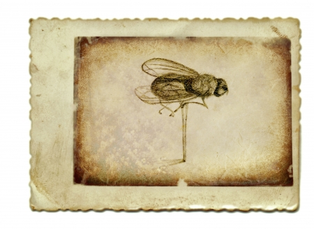 archaically: hand drawing and vintage processing - the fly Stock Photo