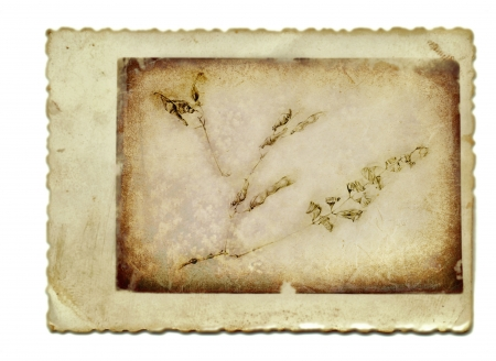 archaically: hand drawing and vintage processing - herbs Stock Photo
