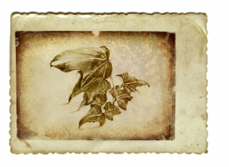 academic touch: hand drawing and vintage processing - ivy