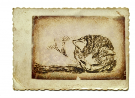 archaically: hand drawing and vintage processing - kitten