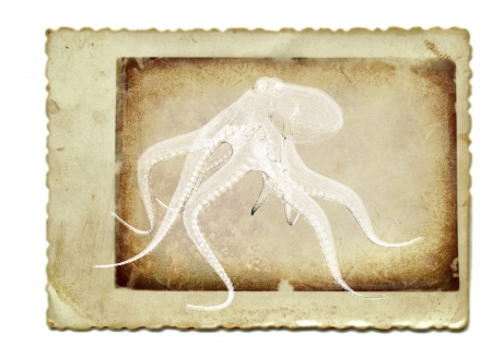 vintage collage with 3D render, octopus photo
