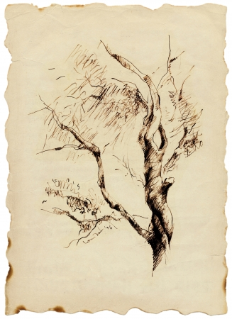 academic touch: autumn and lonely tree - charcoal drawing