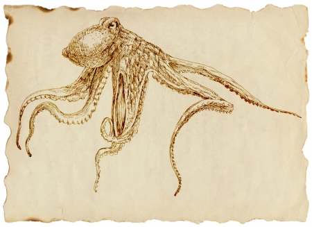 hand drawing, octopus