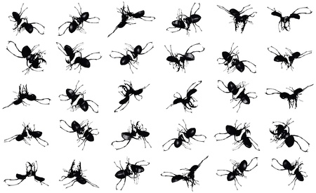 rotations: ants - cg picture