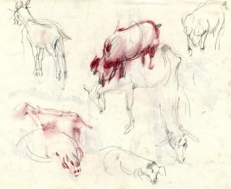archaically: farm animals, drawing