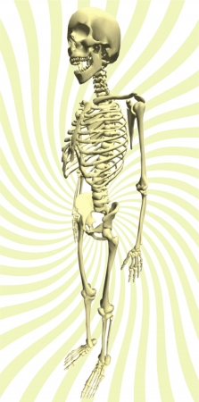 harsh: Illustration No. III, shaded human skeleton, realistic approach