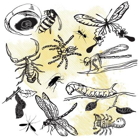 insect collection Stock Vector - 15850293
