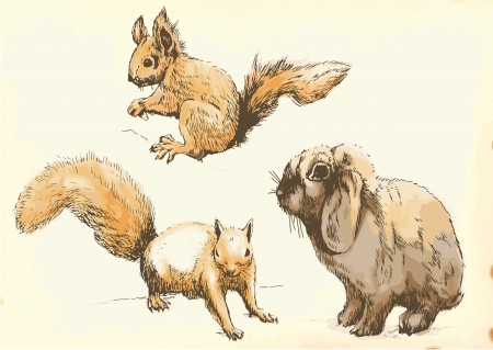 two animals: Collection of two animals - young rabbits and two squirrels in motion Illustration