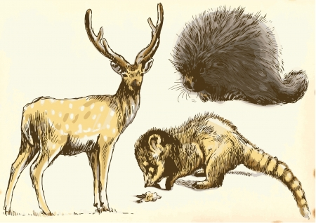 Collection of three animals - Deer, Coati and Porcupine