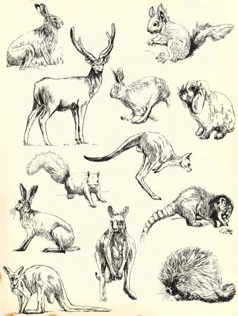 손 그림 검은 윤곽선 - 동물 컬렉션