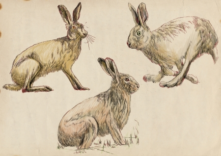 Collection, three studies hare in motion    Hand drawing photo