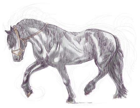 draft horse: A hand drawn illustration of galloping horse