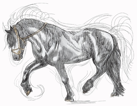 draft horse: Horse  Illustration