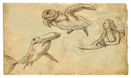 hammerhead: surfing woman sank between hammerhead shark and turtle Illustration