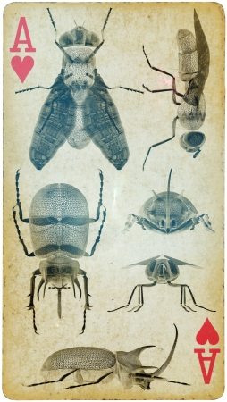 Mixed Media - Collectors of Insect like retro
