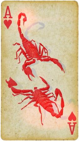 Mixed Media - Scorpions Need Love