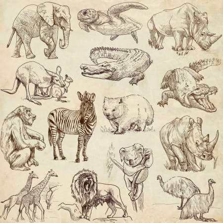 apes: Animals around the world  collection no 1, paper  - Collection of an hand drawn illustrations