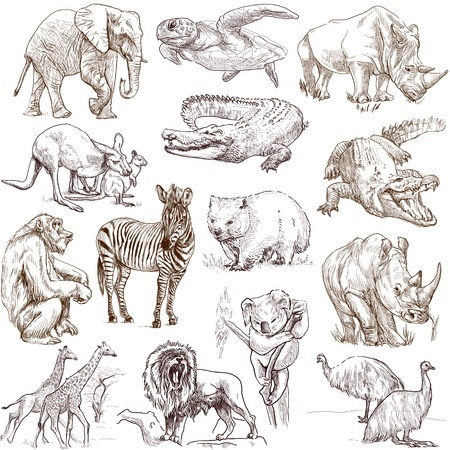 no 1: Animals around the world  collection no 1, white   - Collection of an hand drawn illustrations
