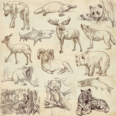 animal texture: Animals around the world  collection no 2, paper  - Collection of an hand drawn illustrations