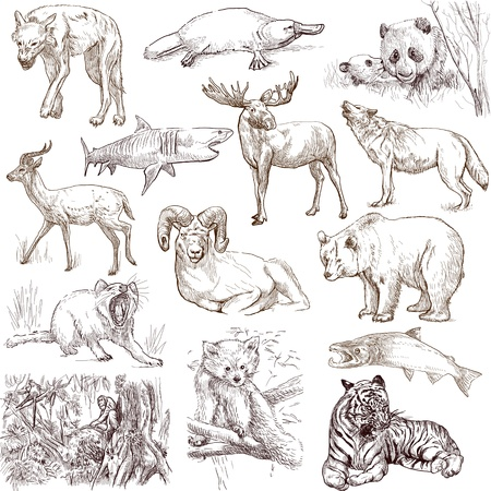 Animals around the world  collection no 2, white   - Collection of an hand drawn illustrations illustration