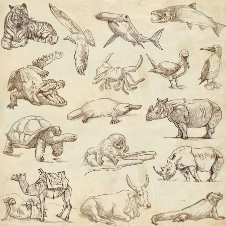 Animals around the world  collection no 3, paper  - Collection of an hand drawn illustrations   illustration