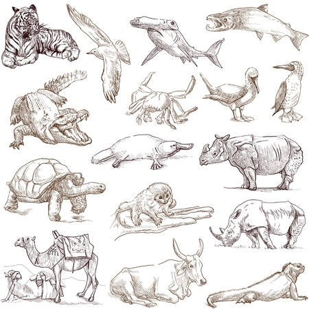 Animals around the world  collection no 3, white   - Collection of an hand drawn illustrations illustration