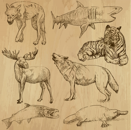 Animals around the World - hand drawn illustrations converted into vectors Vector