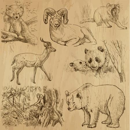grizzly: Animaux dans le monde - illustrations tir�es par la main convertis en vecteurs