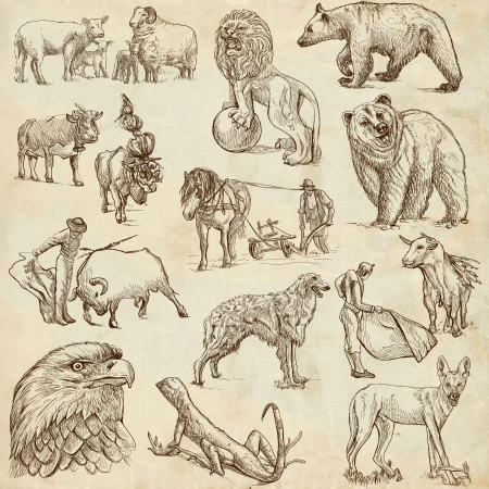 Animals around the World  set no 3  - Collection of an hand drawn illustrations  illustration
