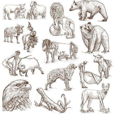 세계의 동물은 3을 설정하지 - 손으로 그린 일러스트 컬렉션 스톡 사진