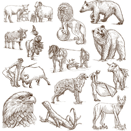 rams: Animals around the World  set no 3  - Collection of an hand drawn illustrations  Stock Photo