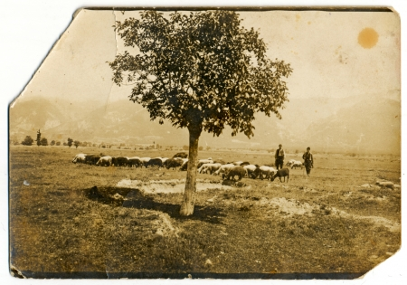 Herdsmen with a herd of sheep standing under a tree  in the background are the mountains  circa 1925 Stock Photo - 24156128