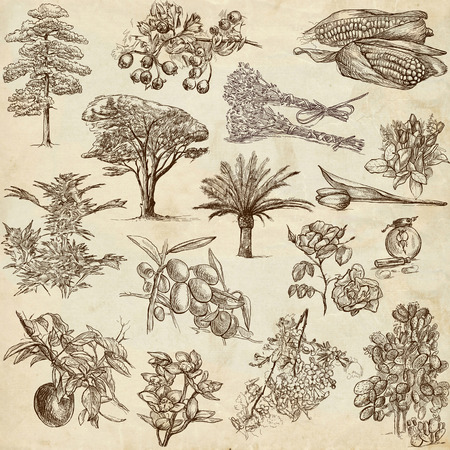 Trees, Plants - An hand drawn illustrations in one big collection on old paper illustration