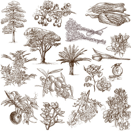 fine arts: Trees, Plants and Flowers  around the World  set no 1, white set  - Collection of an hand drawn illustrations  Stock Photo