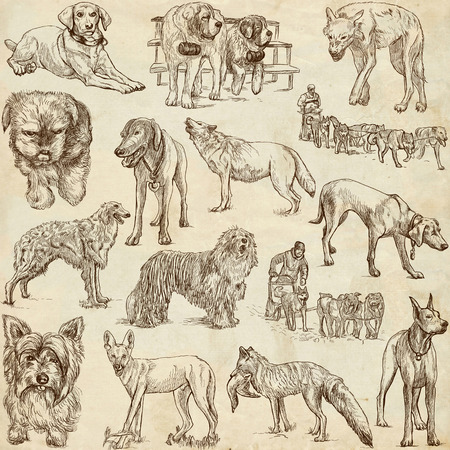 fox terrier: Dogs, Canidae - An hand drawn illustrations in one big collection on old paper Stock Photo