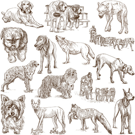 Dogs  Canidae  around the World  set no  1, white  - Hand drawings Stock Photo