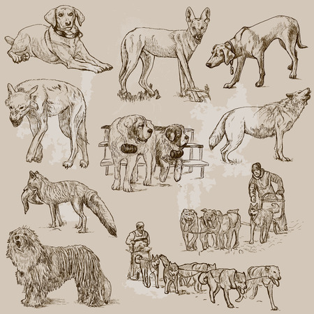DOGS  Canidae  around the World  set no 1   Vector
