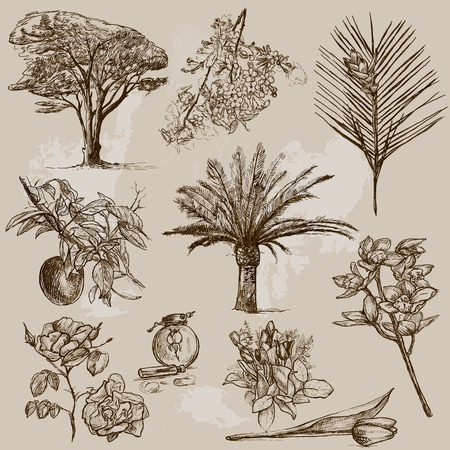 Trees, Plants and Flowers around the World  set no 2   Vector