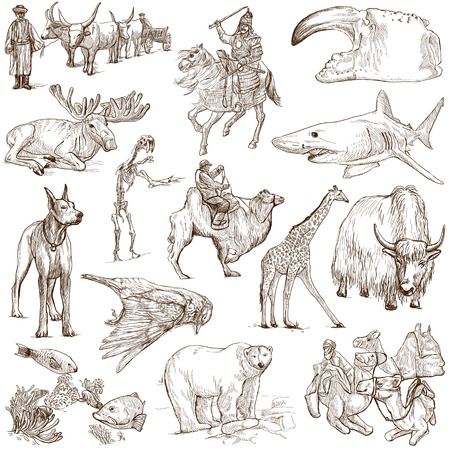 dog shark: Animals around the world  collection no 8, white   - Collection of an hand drawn illustrations on white
