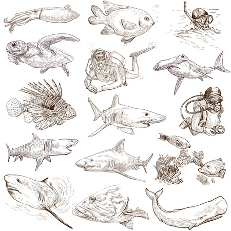 From series: Underwater and Marine life (set no.1)- Collection of an hand drawn illustrations. Description: Full sized hand drawn illustrations drawing on white background.
