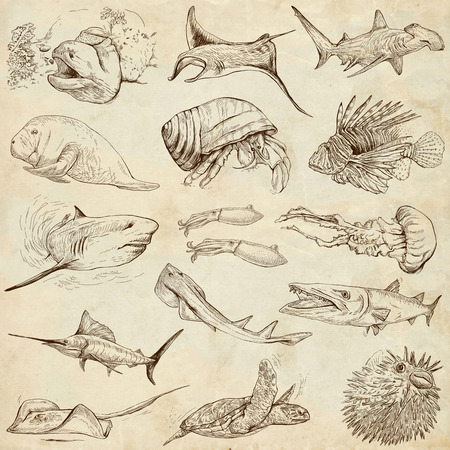 From series: Underwater and Marine life (set no.2)- Collection of an hand drawn illustrations. Description: Full sized hand drawn illustrations drawing on old paper. illustration