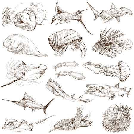 From series: Underwater and Marine life (set no.2)- Collection of an hand drawn illustrations. Description: Full sized hand drawn illustrations drawing on white background.