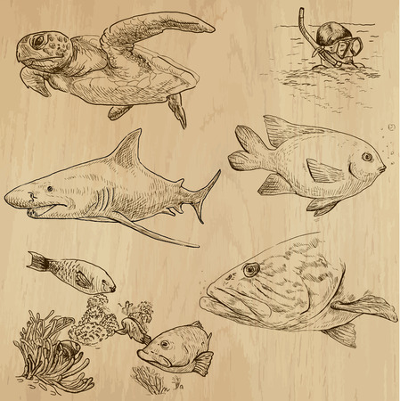 Underwater, Sea Life (vector set no.1)  - Collection of an hand drawn illustrations. Description: Each drawing comprise of two basic layers of outlines, the colored background is isolated. Vector